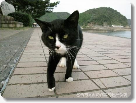 高知 海の猫.