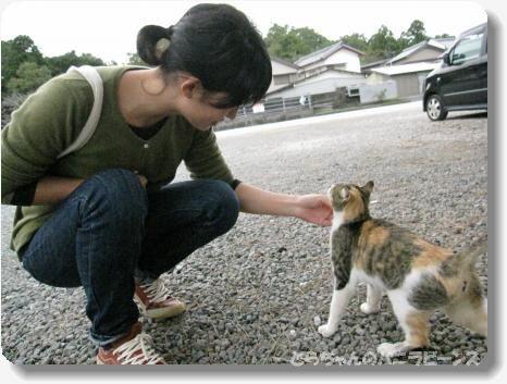 高知 海の猫2