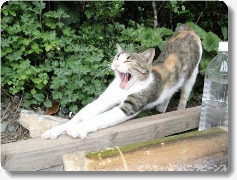 高知 海の猫