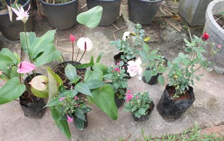 13-12-25flowers.jpg