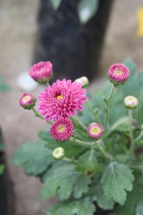 13-12-25flowers4.jpg