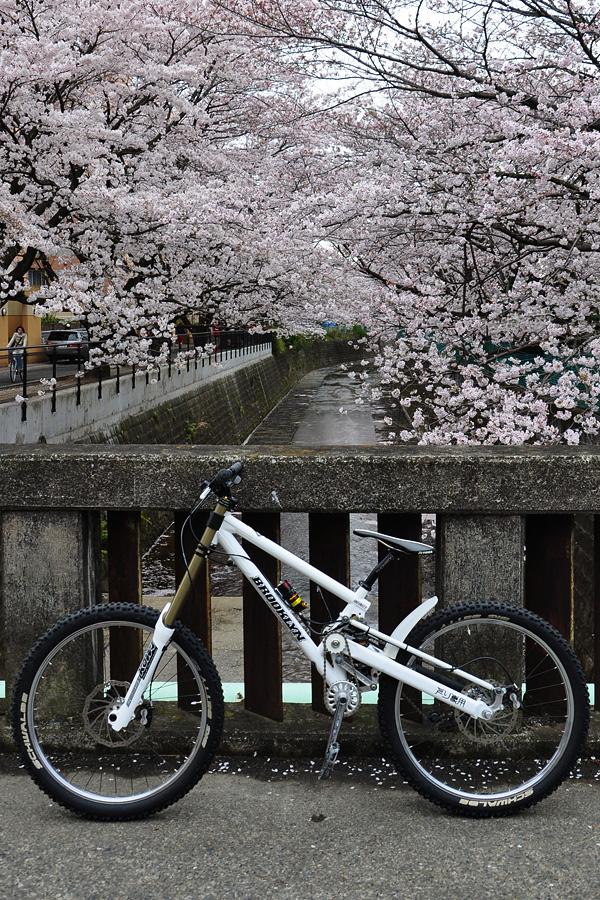 110409-sakura-01.jpg