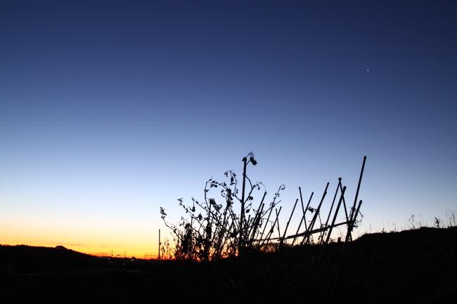 20110108夜明け3