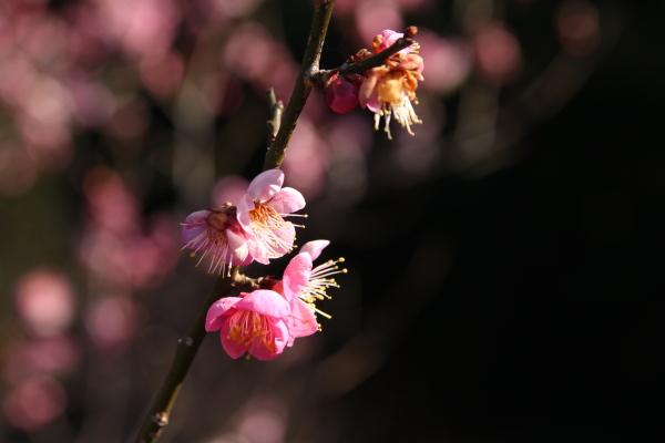 20110122花