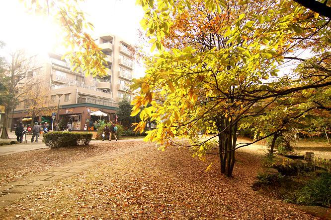 20111127せきれいの道10a