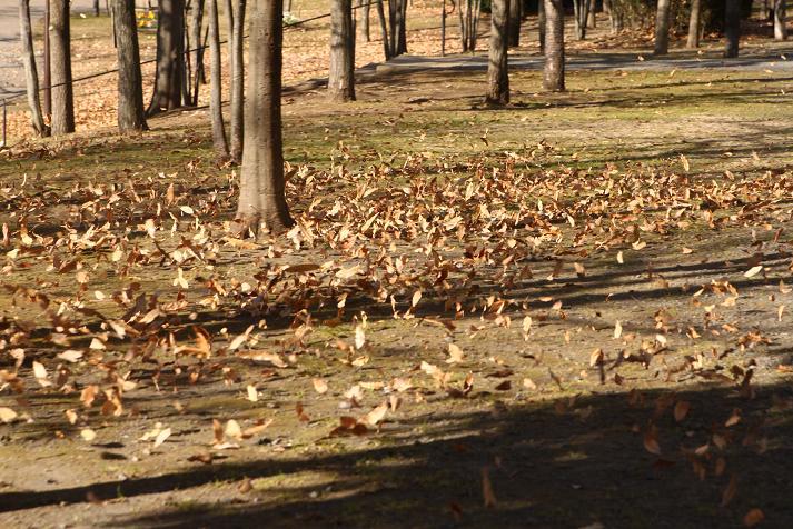 20120102徳生公園1Aa