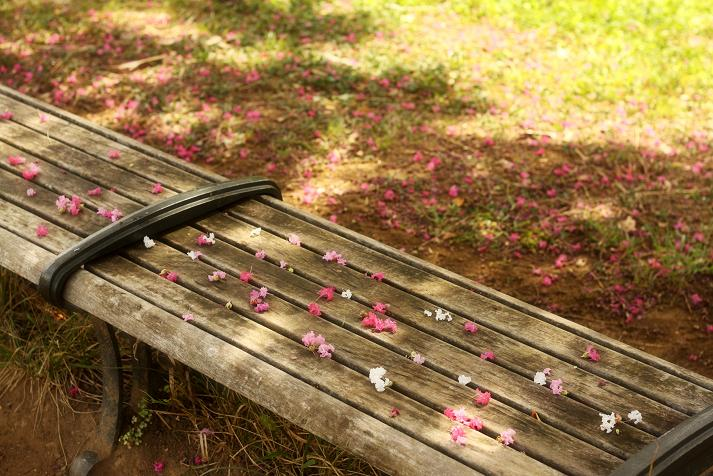 20120901山田富士公園8-1a