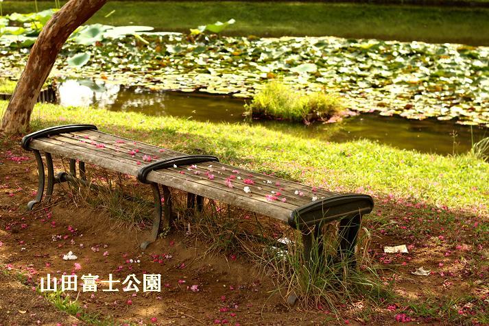 20120901山田富士公園10-1a