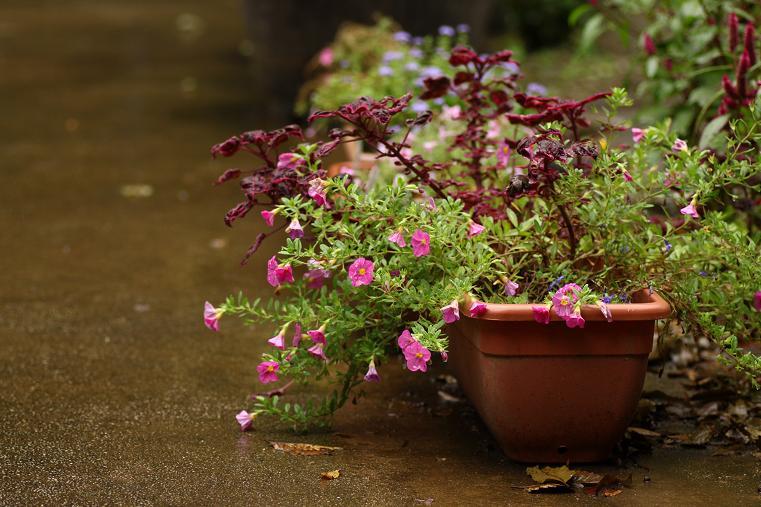20121007雨の日a