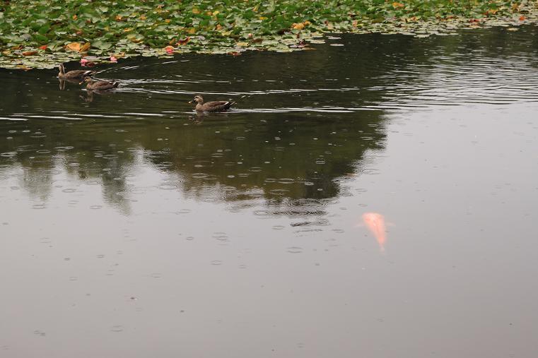 20121007雨の日1a