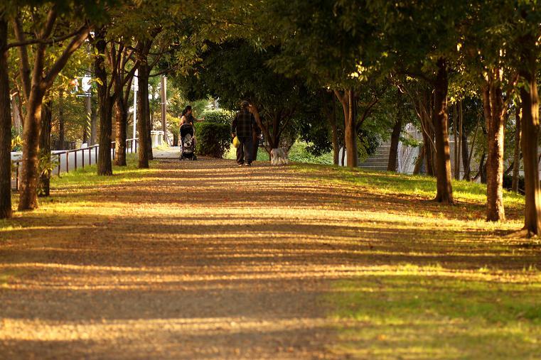 20121104徳生公園21-1a