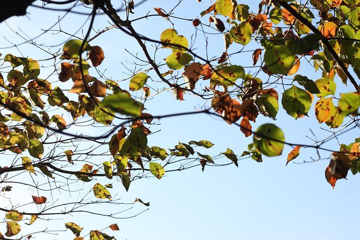 20121104徳生公園16a