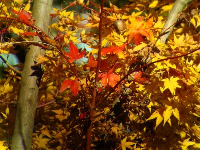 紅葉&黄葉:クリックして大きな画像で御覧下さい