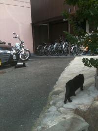 101103クロネコvs黒猫
