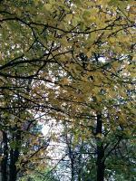 leaf03.jpg