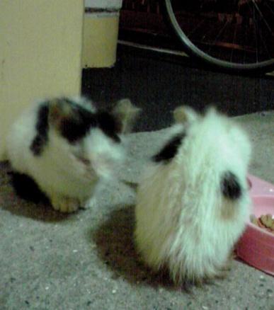 黒白・三毛白2