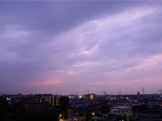 murasaki_20110615165659.jpg