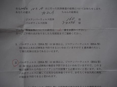PB121290.jpg