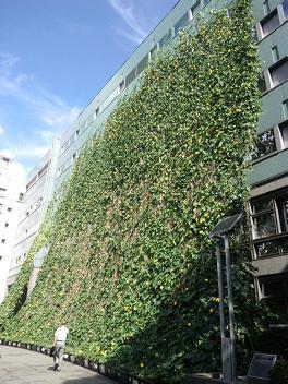 緑のカーテン 9月