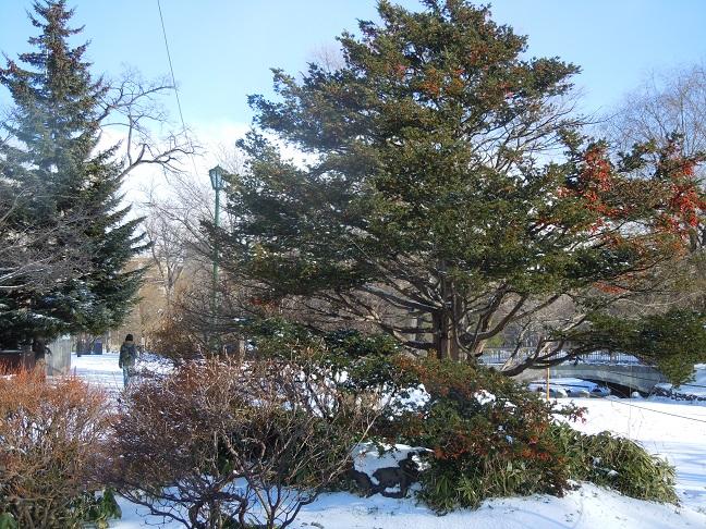 冬の公園2