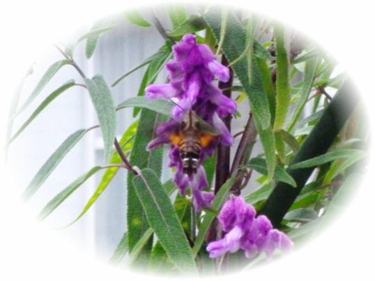 ハチドリ2