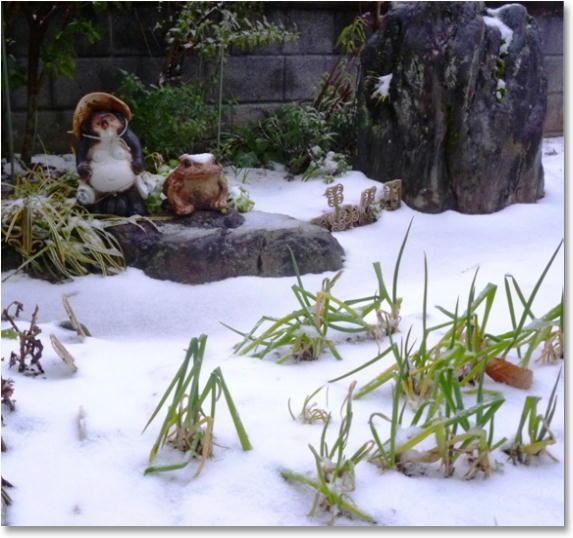 庭の狸も冬化粧