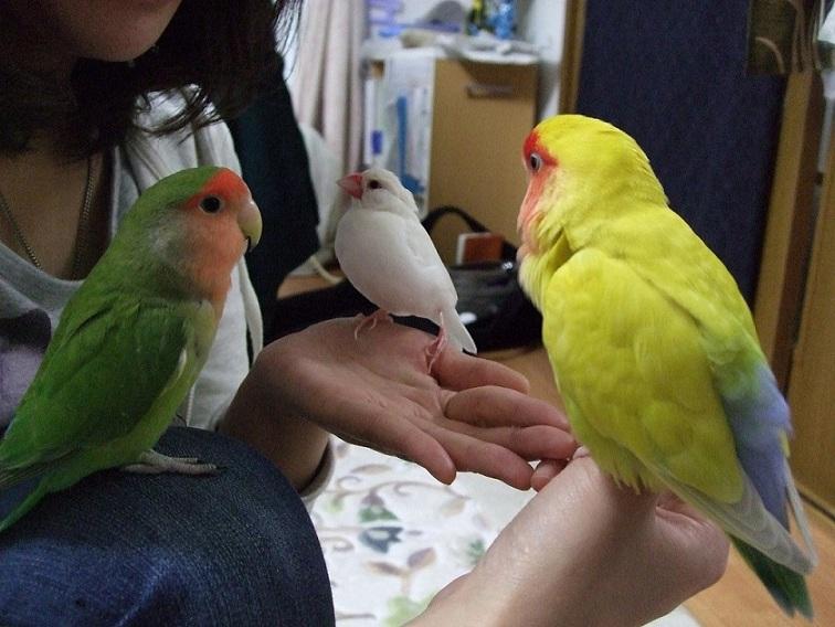 2011_06010041.jpg