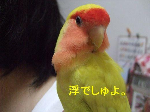 2012_09250008.jpg