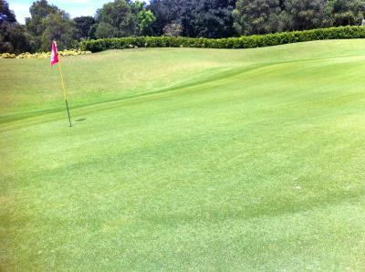 golf_005005.jpg