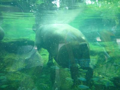 zoo002.jpg