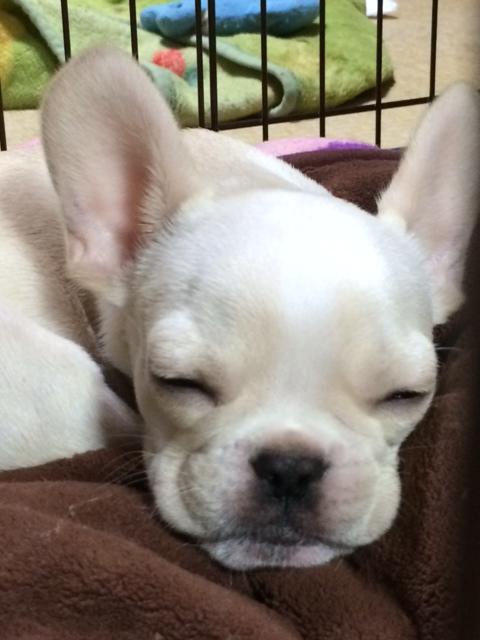すくな 寝顔2