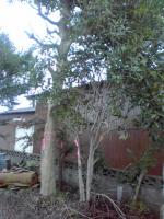 bodaiji20100718