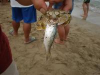 2011海の日 8