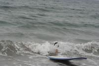 2011/8/13~8/18 サマーサーフボード 60