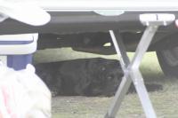 2011/8/13~8/18 サマーサーフボード 75