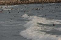 2011/8/28 近くの海 2