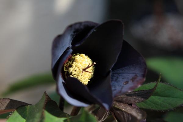 2011-08 ブルーブラック ss