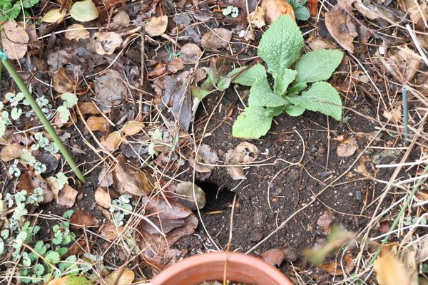 野ネズミの穴?2