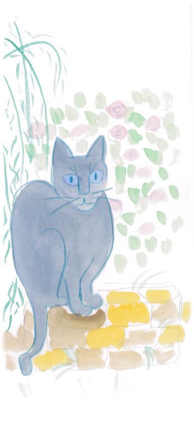 shakys cat 1