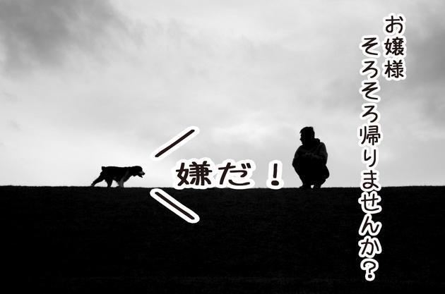 DSC_3803_01.jpg