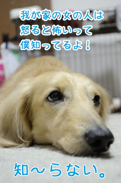 DSC_3958_01.jpg