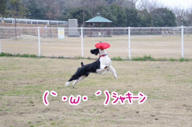DSC_4498.jpg