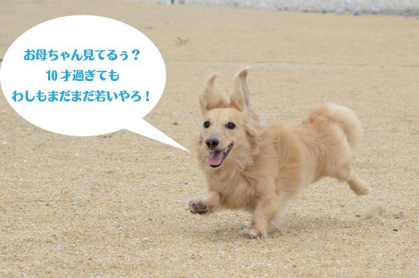 DSC_5556-001.jpg