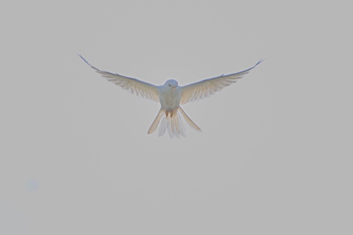 DSC_1442-221007日野チョウゲンアルビノ-B