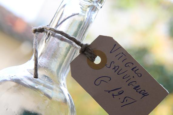 vino bianco sovginion