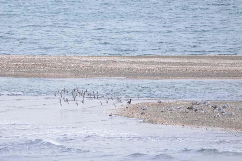 小島の鳥達
