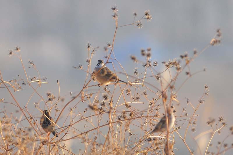 野鳥トリオ