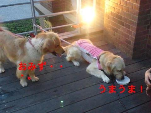 DSC_0213_convert_20110902215145.jpg