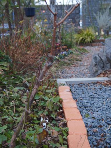 冬枯れの庭②