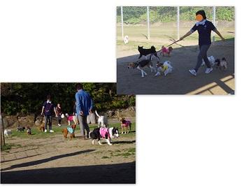 2014-11-22 おおさきドッグラン3